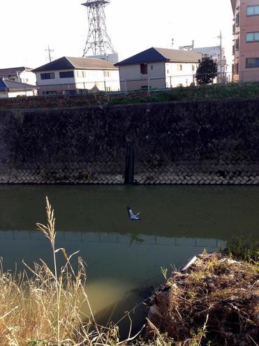 新八間堀川 樋管7