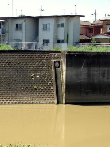 新八間堀川 御城橋下流(左岸)排水樋管
